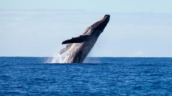 The 12 Best Places in the U.S. to Go Whale Watching 🐋