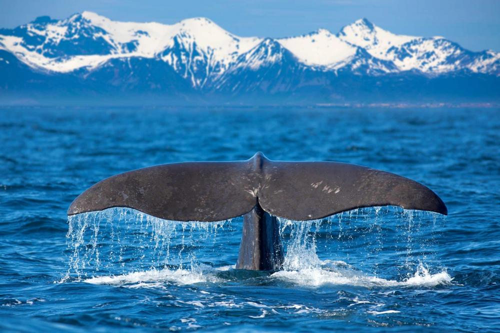 whale watching yacht charter sailme